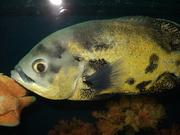 рыбки aквaриумы, продaм