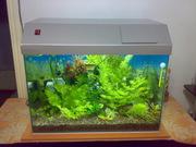 Аквариум,  рыбки,  растения
