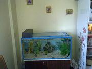Продам аквариум с хищными рыбками