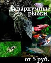 Аквариумные рыбки , улитки, креветки и растения оптом.