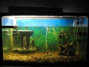 аквариум с железный с каркасом  63л