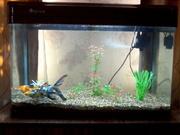 продам аквариум с тремя рыбками