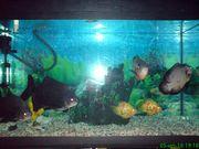 аквариум 200л с хищными рыбами с тумбой продам